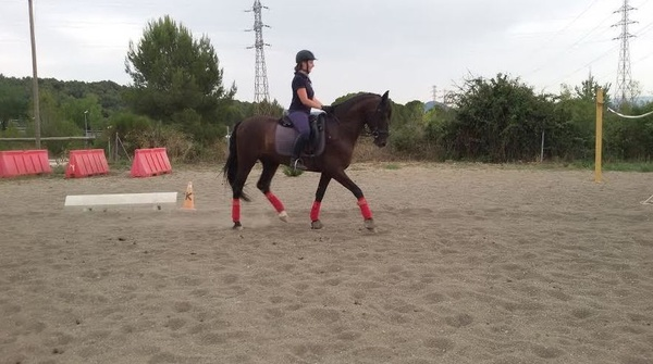 Clases de perfeccionamiento e iniciación para adultos. Con caballos de escuela!