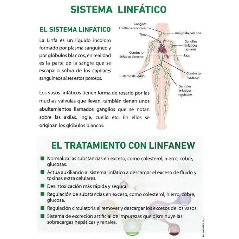Sistema linfático: Servicios de Esther Ruiz Peluquería &  Estética