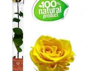Rosa amarilla eterna