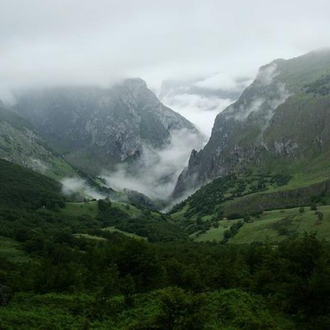 La vegetación es Asturias