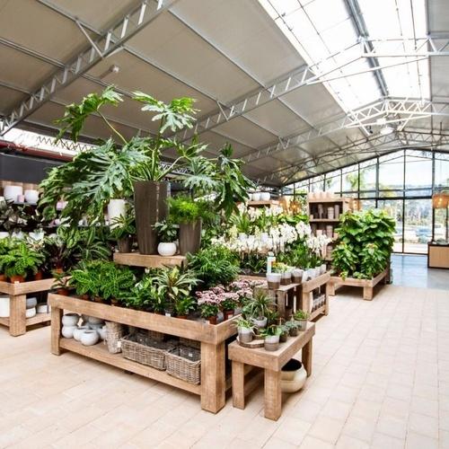 Tienda con plantas de interior y exterior en Ibiza