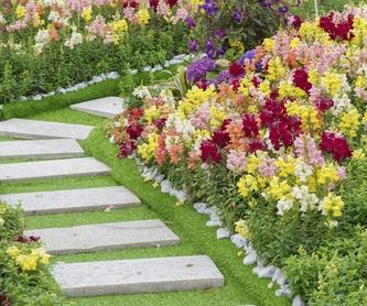 Mantenimiento de comunidades: Servicios de Jardinería Monte de Oro