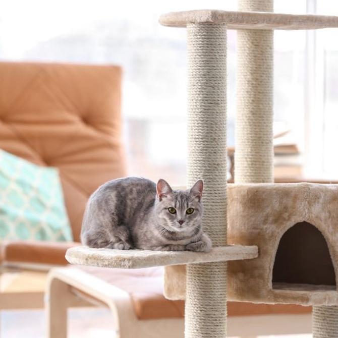 La terraza, un nuevo espacio para tus animales