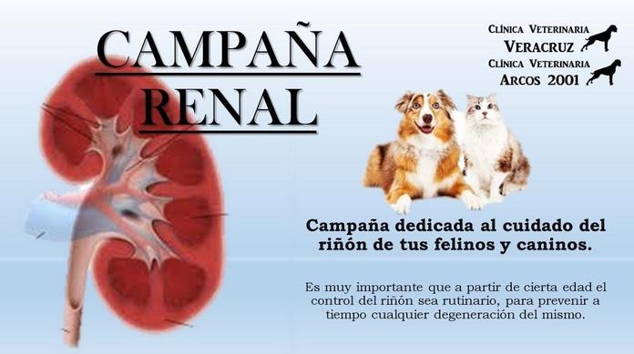 Cuida el riñón de tu mascota en cl centro veterinario Veracruz, Madrid