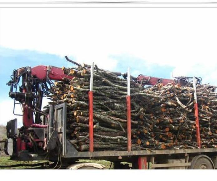 Servicios forestales: Productos y servicios de Forestal Arauzo