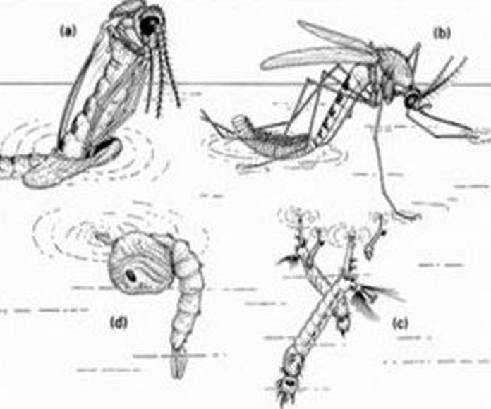 Insectos voladores 2
