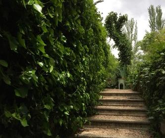 Diseño de jardines: Servicios de Romeral de San Marcos