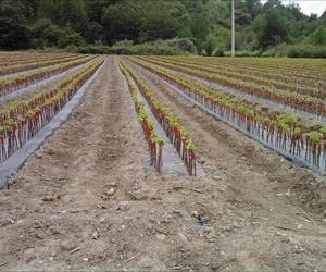 """Así es como crecieron nuestras plantas en los últimos 5 meses. Ya están a vuestra disposición en nuestras instalaciones del Parque Empresarial """"A Raña"""" durante los próximos meses. OS ESPERAMOS!!!!! ... mejor en HD"""