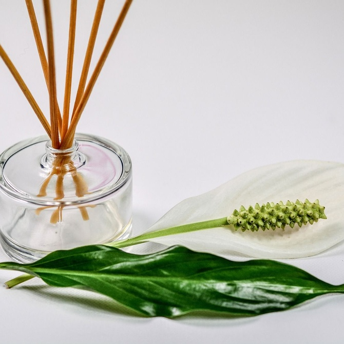 ¿Conoces la naturopatía?