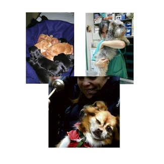 Nuestro equipo veterinario