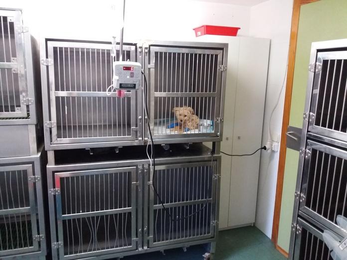 Servicio hospitalización: Servicios de Clínica principal Veterinaria Puerto Mazarrón