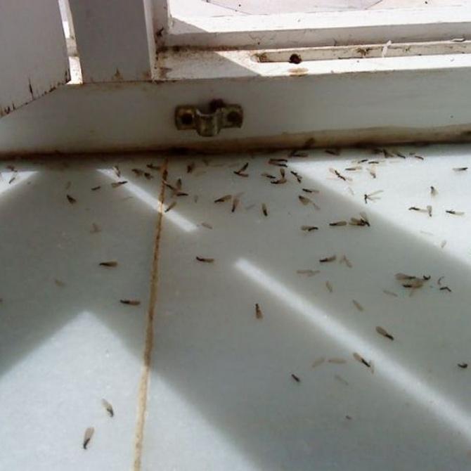 El miedo hacia los insectos puede ser una herramienta evolutiva