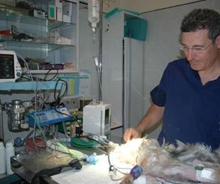 Dr. Alberto Herranz Casellas