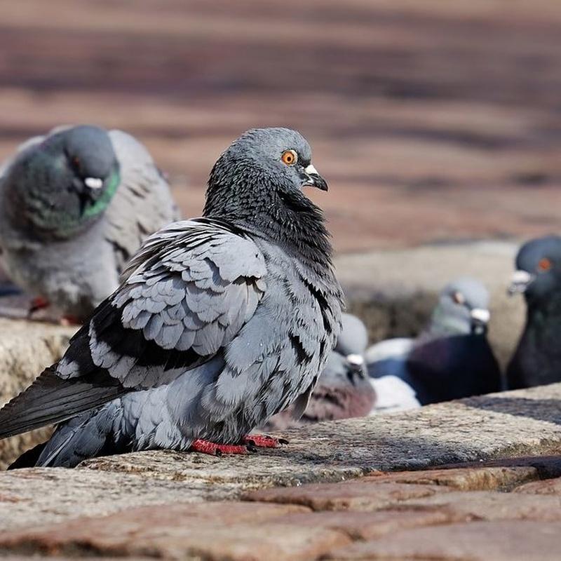 Aves: Servicios de Dys - Hy