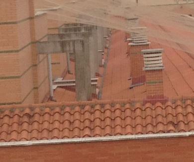 Trabajos de control de aves Salamanca