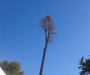 Realizamos todo tipo de talas de árboles y palmeras