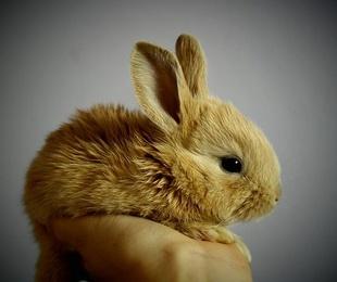 Un conejo, un buen amigo. Todo lo que debes saber