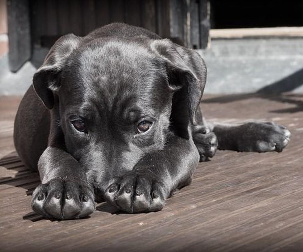 Alimentos prohibidos para perros (II)