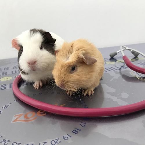 Clínica veterinaria hospitalizaciones Tenerife Sur