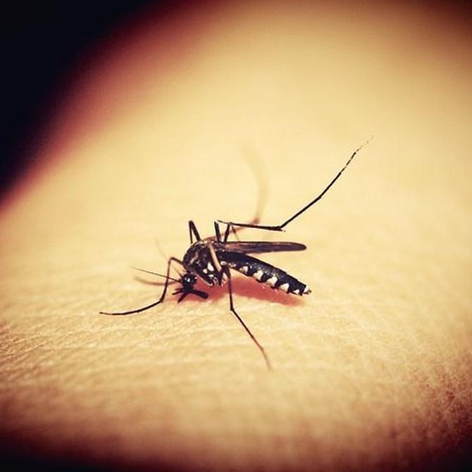 Cómo evitar las picaduras de mosquitos
