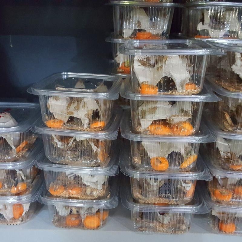 Alimento vivo: Catálogo de Reptil Parc