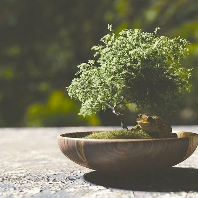 Historia del bonsái