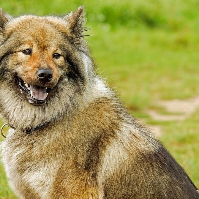El cepillado: un paso indispensable en el cuidado de tu perro