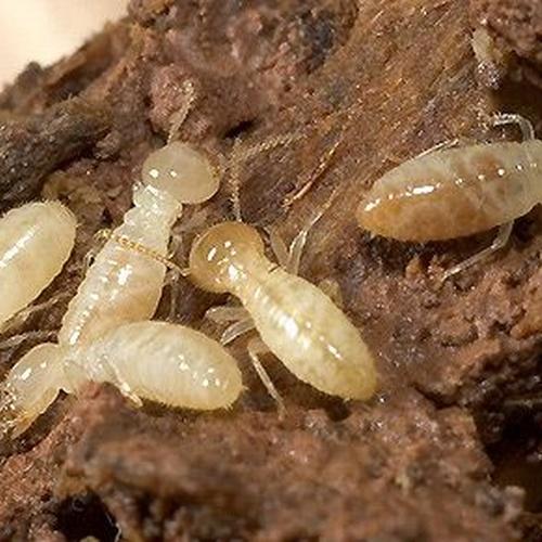 Control de plagas en Castellón de la Plana