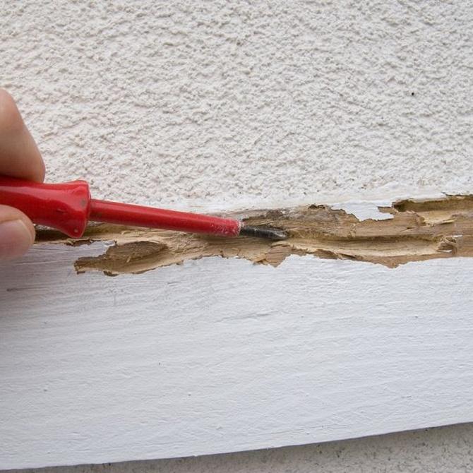 El peligro de una plaga de termitas