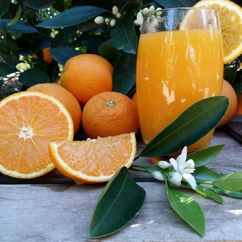 Naranjas zumo mediano 17 kg: Productos de Naranjas Julián