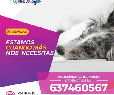 Servicio Veterinario de Urgencias 24 horas