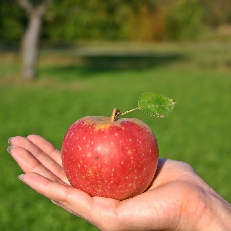 Curso Alimentacion Nutrición y Naturopatia Alimentaria