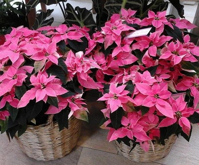 Plantas de exterior e interior: Productos y servicios de Espacio de Creación Acacia