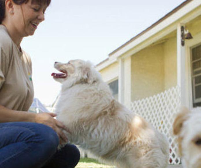 Visitas a domicilio: Servicios  de Centro Veterinario Bienestar Animal Almerimar