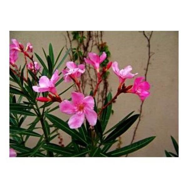 Plantas: Productos y Servicios of Floristería Decoflor