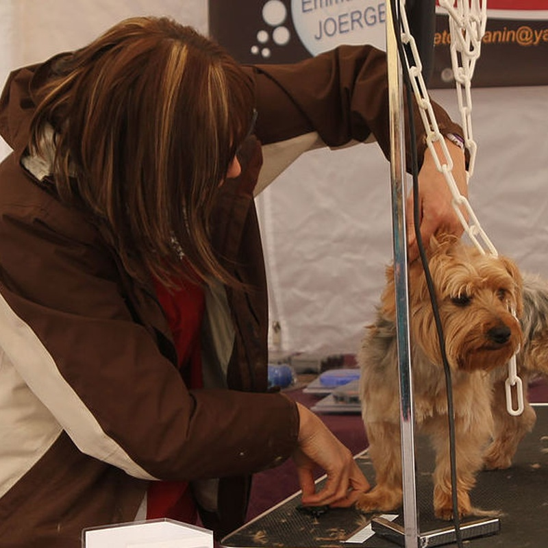 Peluquería canina: Catálogo de Clínica Veterinaria Los Galgos