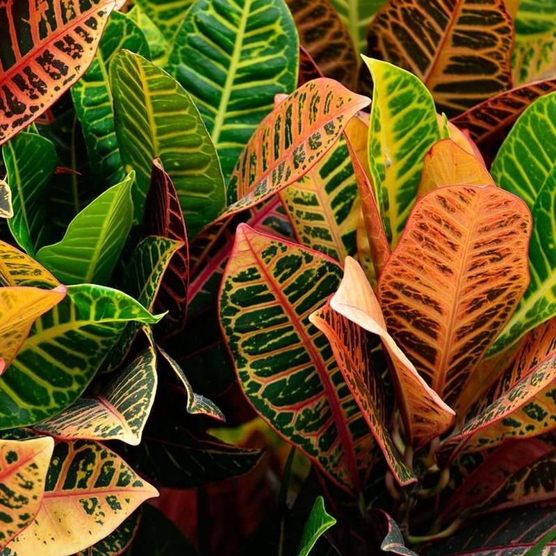 Venta de plantas de interior y exterior: Servicios de Plantas Benalla