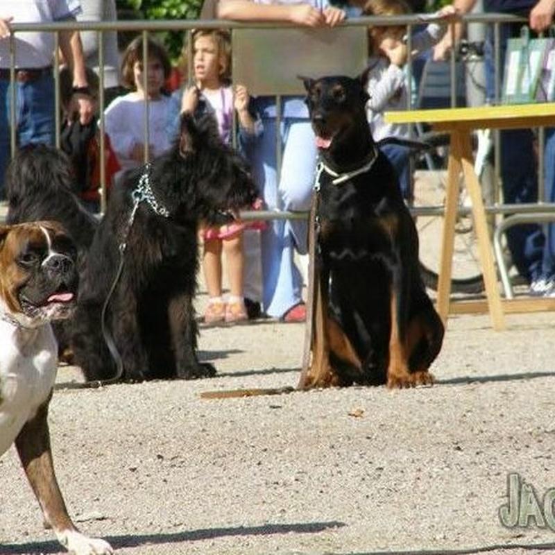 Pre educación de cachorros: Servicios de Jag-Gos