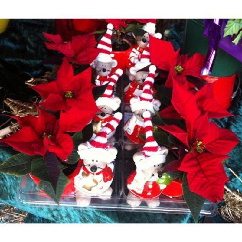 Detalles para estas Fiestas: Catálogo de Flores Maranta