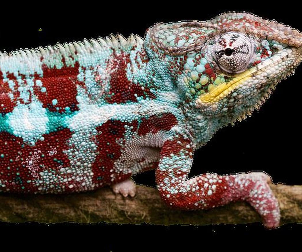 Las enfermedades más comunes en los animales exóticos