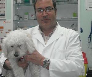 Galería de Veterinarios en  | Argos Clínica Veterinaria