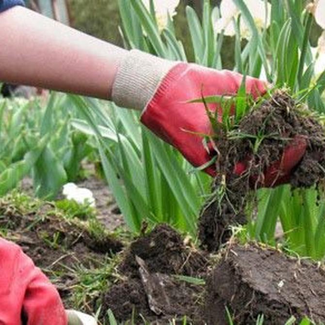 Preparar el jardín para la primavera