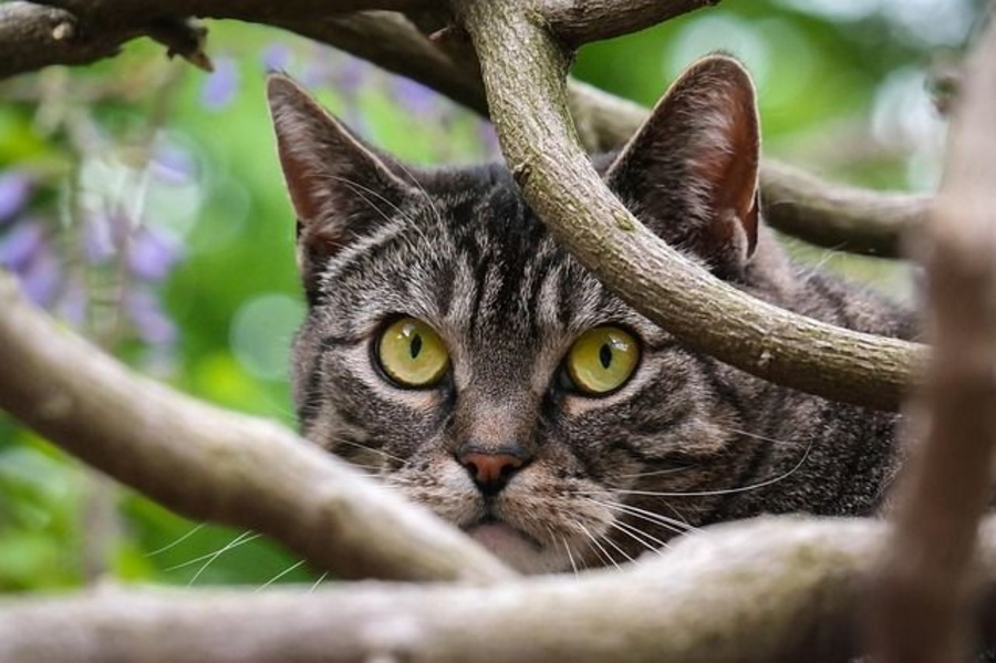 5 Curiosidades sobre os gatos