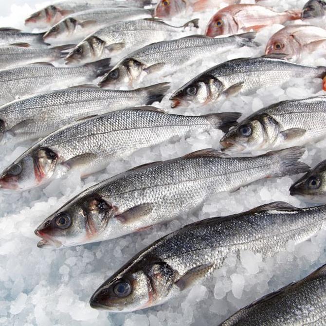 ¿Como incorporar el pescado a nuestra dieta?