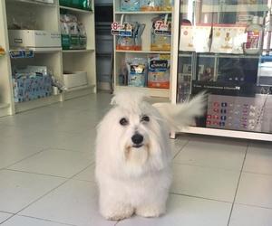 Estética canina en Madrid