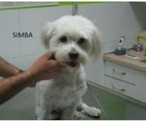 Visita a domicilio veterinarias