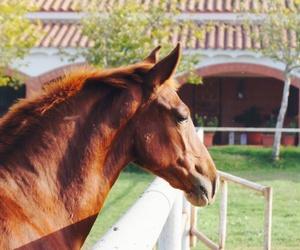 Desde 1991 dedicados al mundo del caballo
