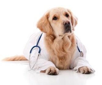 Peluquería canina: Servicios de Clínica Veterinaria Jacinto Benavente