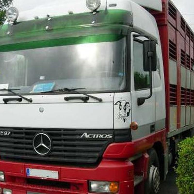 Área de trabajo: Servicios de Transportes de Animales Irazola