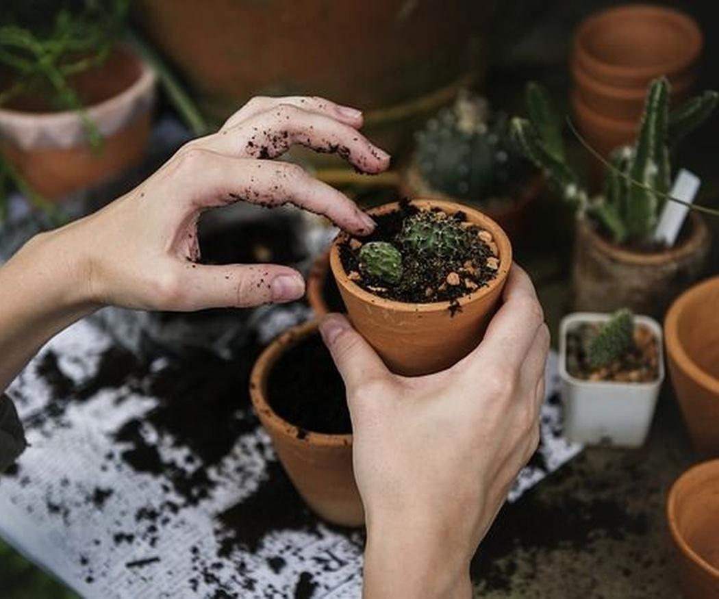 Cuatro ideas para crear un  jardín ecológico